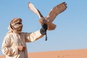 formation arabe
